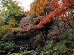 殿ヶ谷戸庭園写真