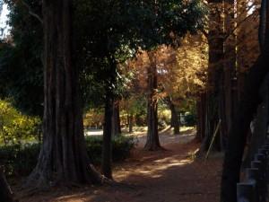 善福寺公園写真
